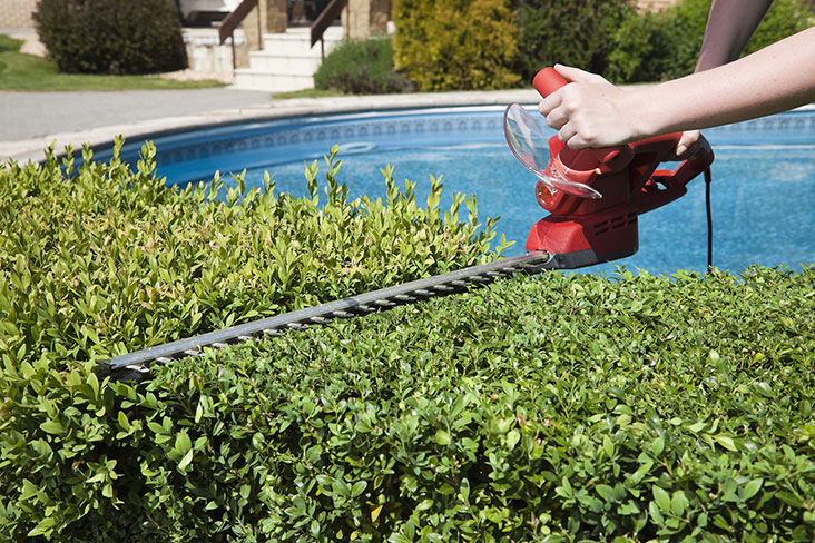 a homeowner trimming their hedges