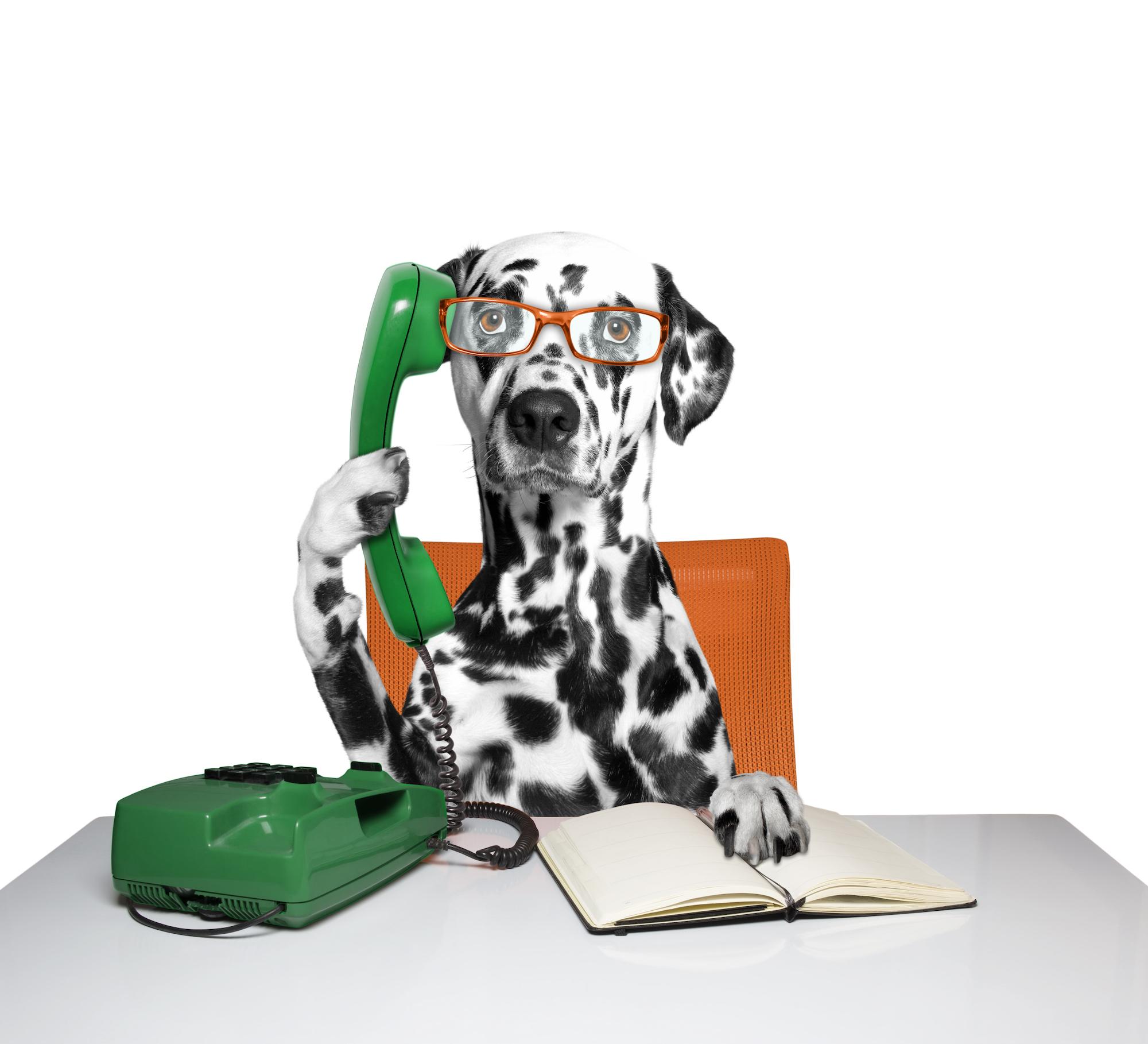 Dog on the call